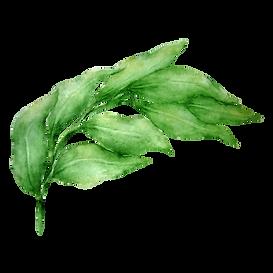 Las hojas 1