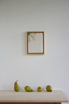 Kadro bovina petroselo