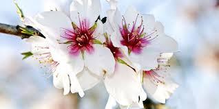 Frühling auf Rhodos