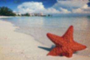 starfish-1122849_960_720.jpg