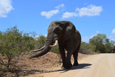 Sud Africa460.jpg
