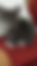 dördüncü kedi sahiplendirme resminin ilanları arasındaki yeri