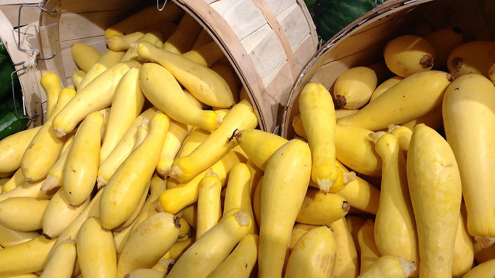 Early Prolific Yellow Squash Seeds