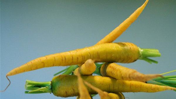 Solar Yellow Carrot Seeds