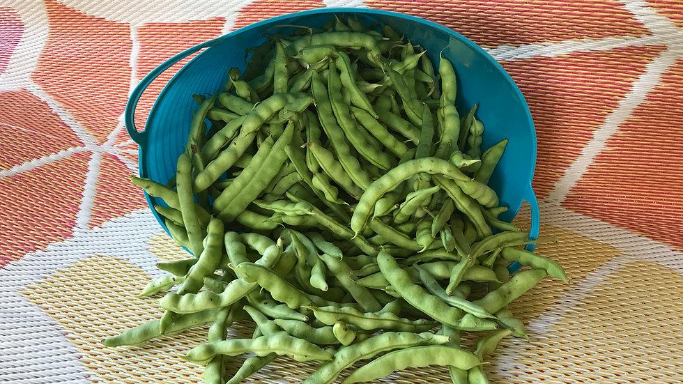 Turkey Craw Pole Bean Seeds