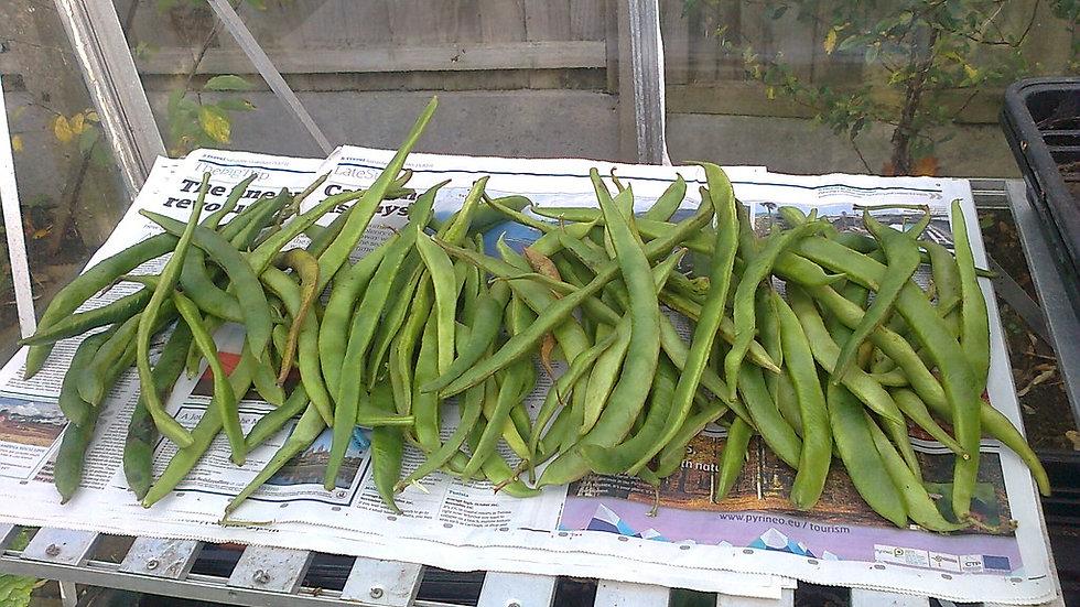 White Half Runner Bean Seeds