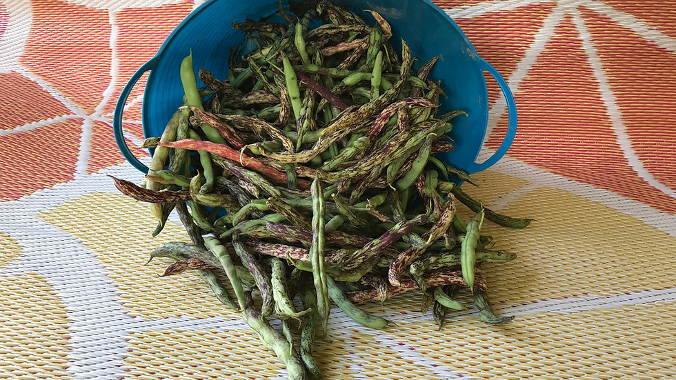 Rattlesnake Pole Bean Seeds