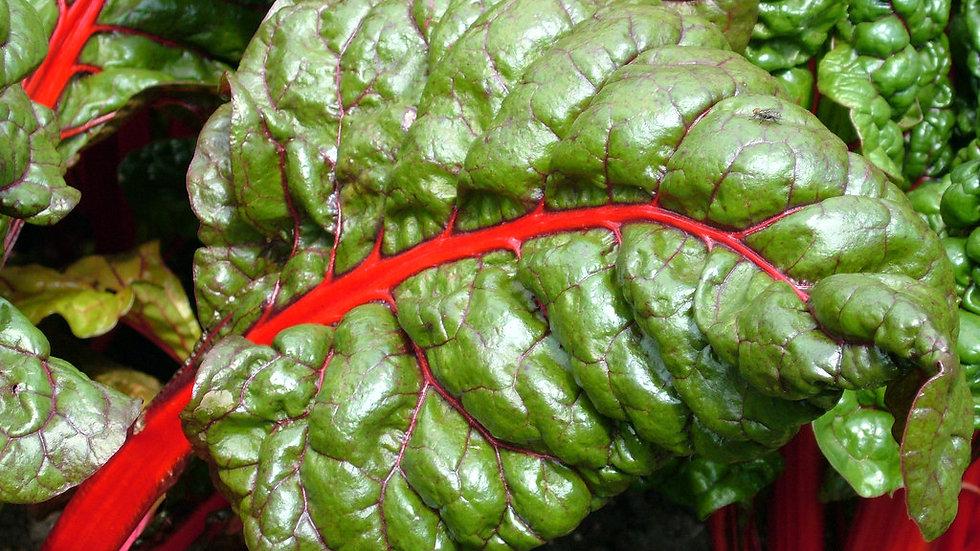 Ruby Red Rhubarb Swiss Chard Seeds