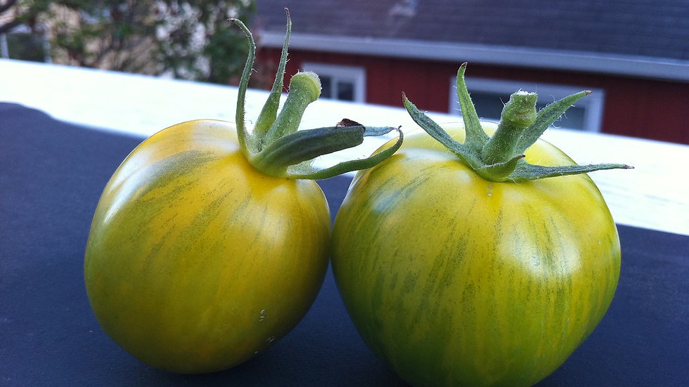 Green Zebra Tomato Seeds