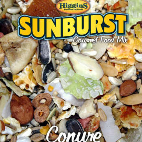 Sunburst Conure