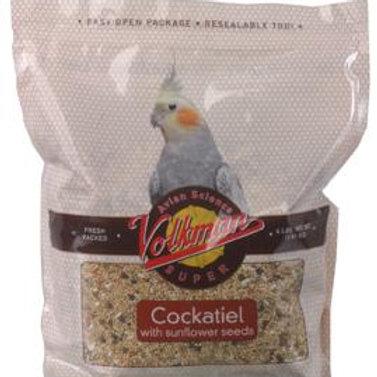 Volkman Cockatiel with Sunflower Seeds
