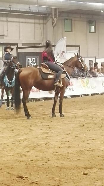 Cavalli in attesa di competere.jpg