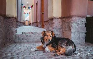 Nidra Wasi Sweet Pup.jpg