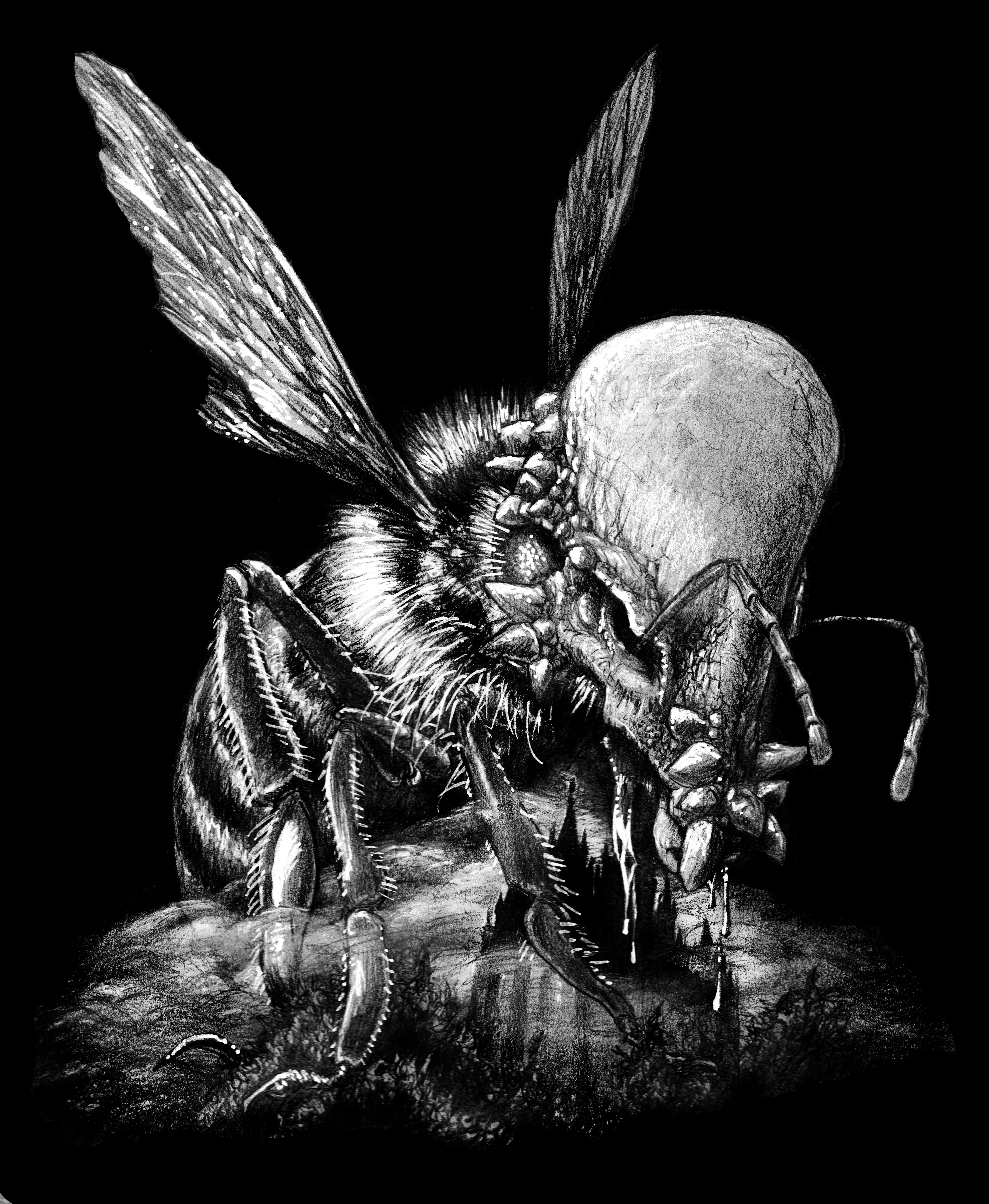 Bumble Bee/Pachycephalosaurus