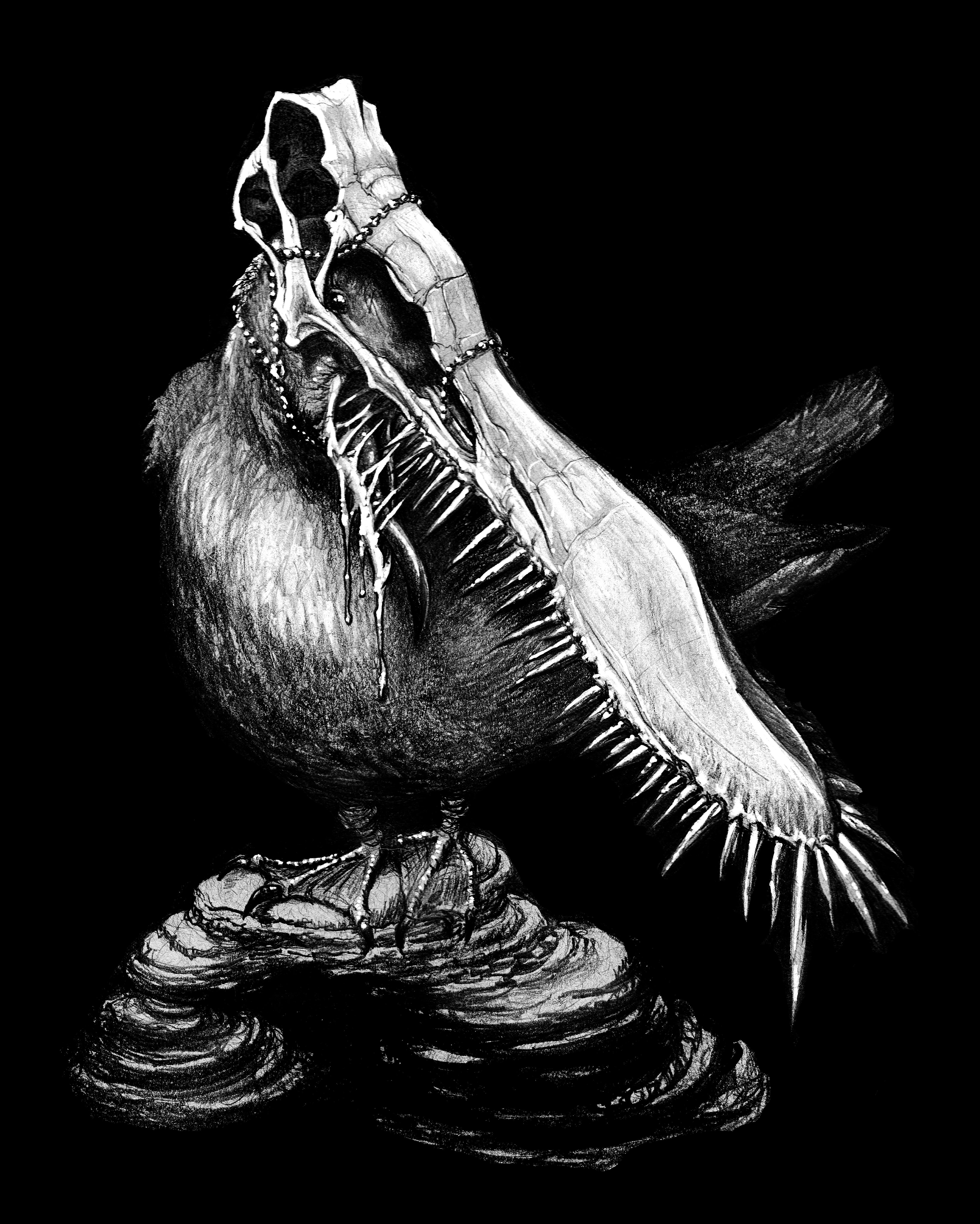 California Gull/Pterosaur