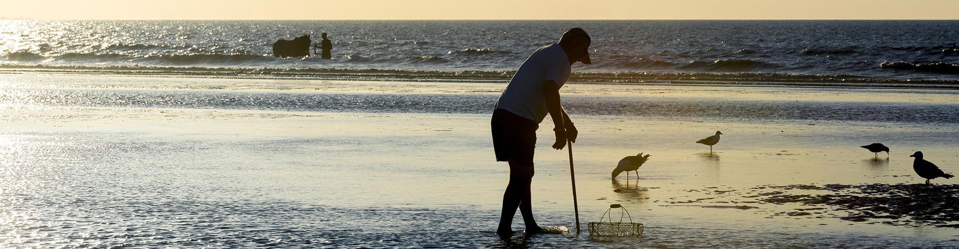 pêche à pieds (coques de Cabourg)