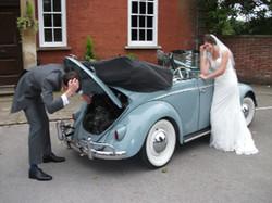 weddingbeetle breakdown