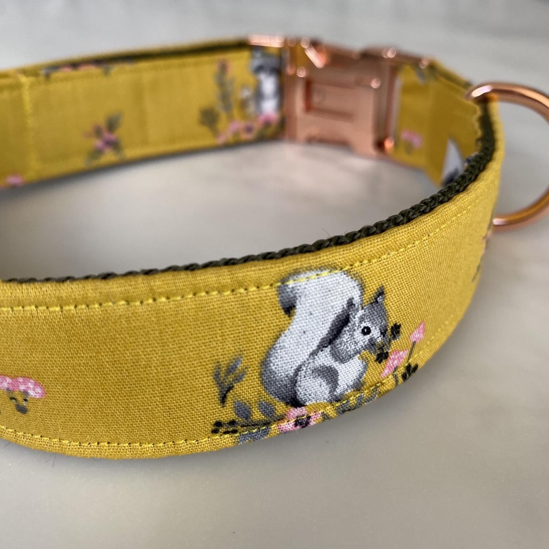Ochre Squirrel Racoon dog collar