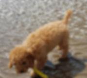 archie-beach-pup.jpg