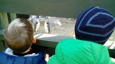 Yellow Eyed Penguin Viewing