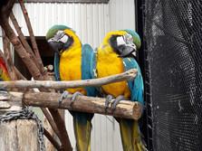 At Botanic Garden Bird Aviaries