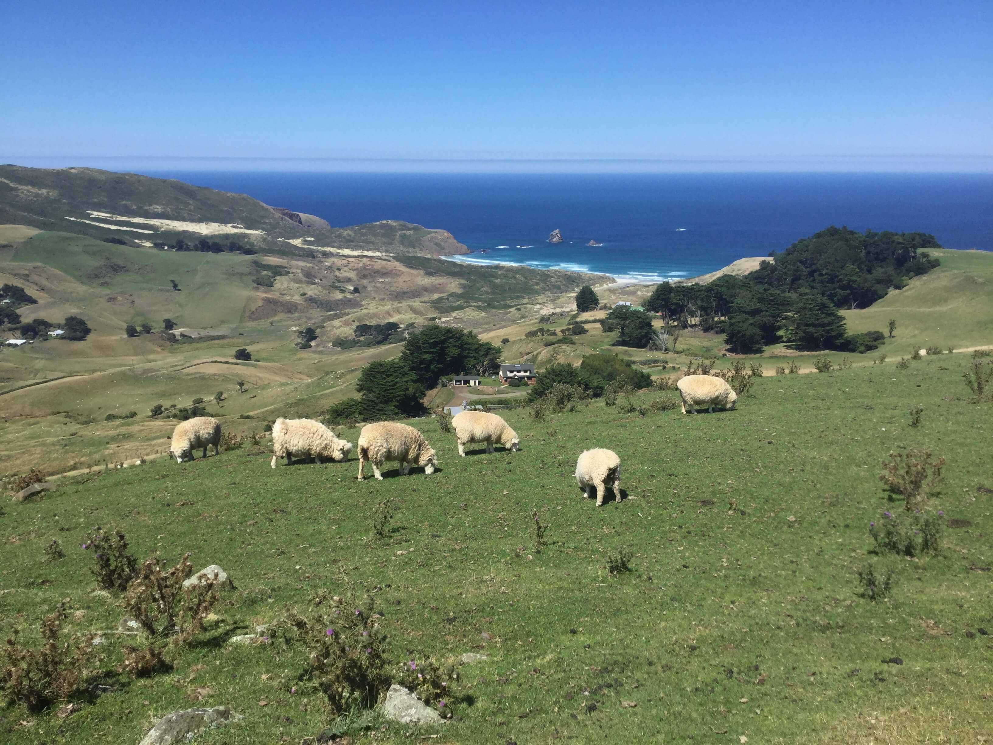 Otago Peninsula Scenery
