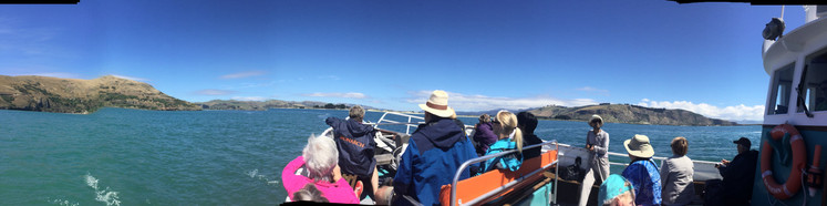 Willdife Cruise with Fantail Tours