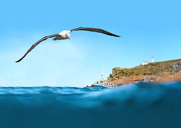 From wildlife cruise