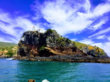 Taiaroa Head, Otago Peninsula