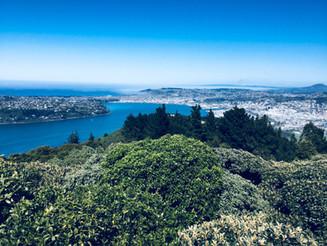 Panorama of Dunedin