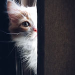 adorable-animal-cat-320014.jpg