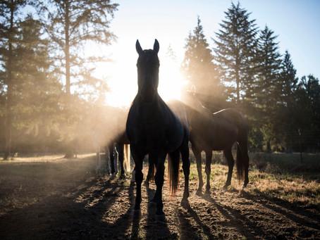 Atınızın İlk Yardım Çantasında Olması Gereken 15 Şey