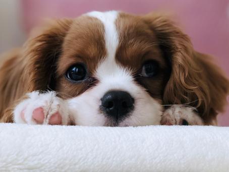Evcil hayvanınız COVID-19 taşıyıcısı olabilir mi?