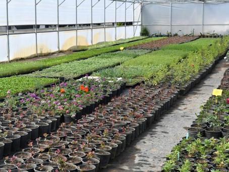 """Balıkesir'de """"Tıbbı Aromatik Bitkilerle Sağlığa Yolculuk"""" Çalışmaları Başlıyor"""