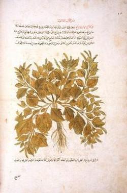 ibn baytar camiu mufredat al adviya 2