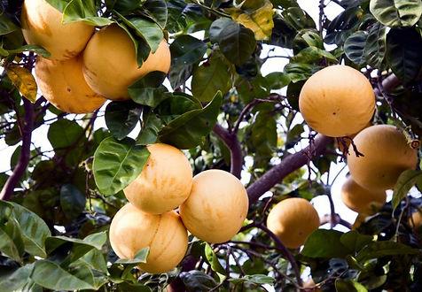 citrus paradise.jpg