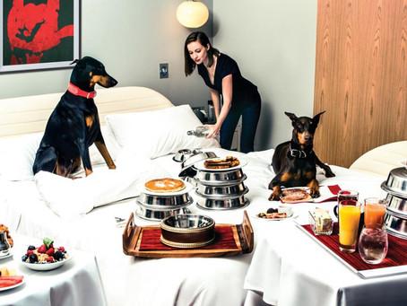 Amerika'nın En İyi 9 Pati-Dostu Lüks Oteli
