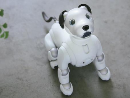 Robot bir Köpeği Sevebilir Misin?