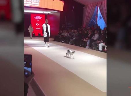 Davetsiz Model Catwalk Nedir Herkese Gösterdi