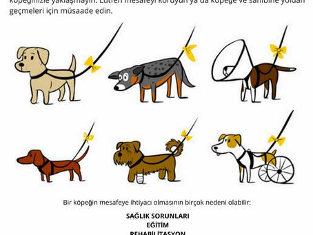 Sarı Kurdeleli Köpek Projesi
