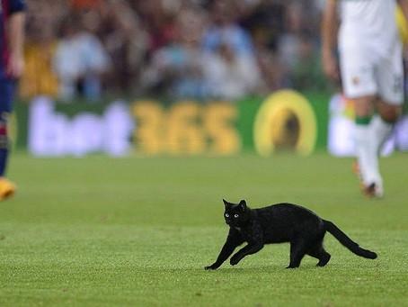 Barcelona Maçını Sevimli Bir Kedi Bastı