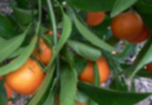 clementine monreal.jpg