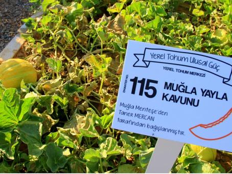Muğla'nın Tıbbi-Aromatik Bitkiler Bahçesi ve Yerel Tohum Merkezi