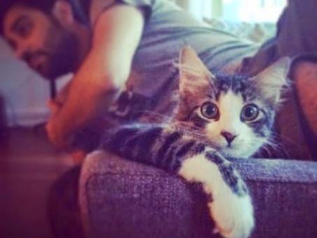 Kedilere Göre İnsan Büyük Cins Bir Kedi