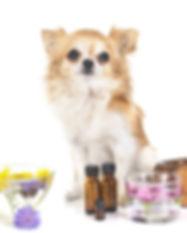 animal-aromatherapy-72dpi-Depositphotos_