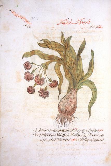ibn baytar camiu mufredat al adviya 1