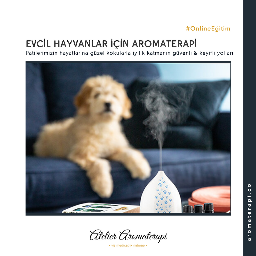 Evcil Hayvanlar İçin Aromaterapi