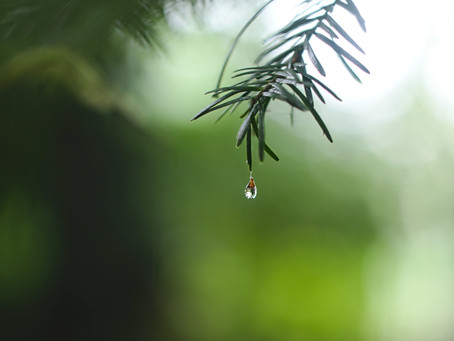 Yağmurdan Parfüm Yapanlar