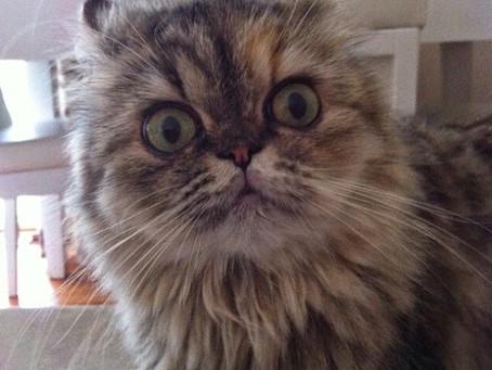 Kedilerle İletişim 101