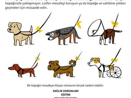 Sarı Kurdeleli Köpek Projesini Duymuş Muydunuz?